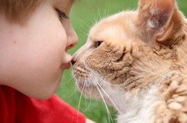 Аллергия в доме: всегда виноваты животные?