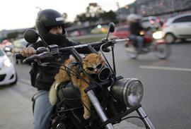 Кот, мотоцикл