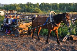 Фермеры России хотят создать собственную торговую сеть