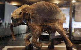 Владимир Путин посетил Музей мамонта в Якутии