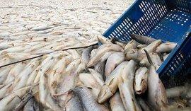 В рыбных портах - 'рыба', как в домино?