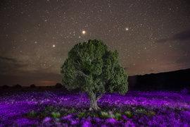 природа, вечер, дерево