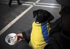 Украинские экономисты признают, что каждый третий житель Незалежной будет выброшен за черту бедности
