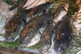 иглобрюх, фугу, рыба