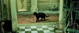 черная кошка, Матрица