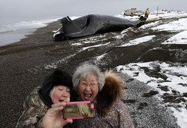 Аляска, кит