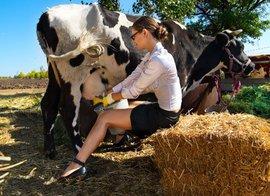 'В селе должно быть выгодно держать коров'