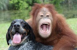 обезьяна, собака