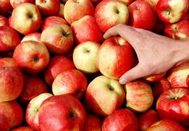 В России могут запретить поставки винограда и яблок с Украины