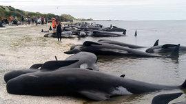 дельфины, Новая Зеландия