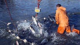 Заместитель руководителя Росрыболовства Василий Соколов в прямом эфире видеоканала Pravda.Ru рассказал о проблемах экспорта и импорта рыбной продукции, а также о неуловимых