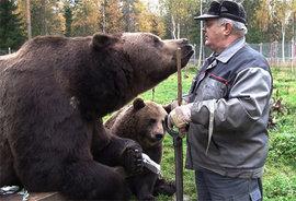 Медведи, человек, дружба
