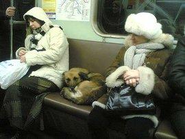 Животные в городе: деловые собаки и вороны-зацеперы
