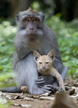 обезьяна, котенок