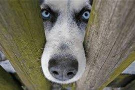 психологи, животные, человек, домашнее животное, недобрый человек, собака, кошки, коты, мурлыки, домашние питомцы